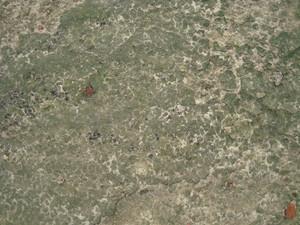 Ground Lichen