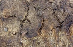 Ground Texture 16