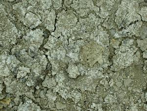 Ground Texture 26