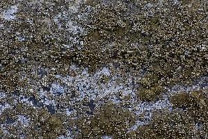 Ground Texture 46