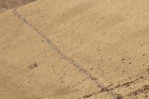 Ground Texture 86
