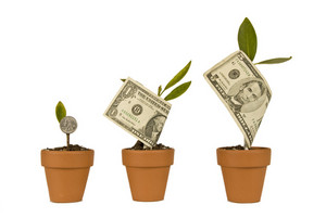 Growing Money In Flower Pots