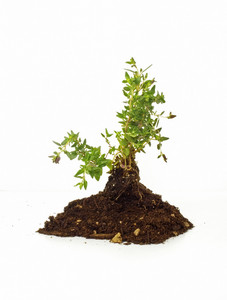 Growing Plant In Soil 172