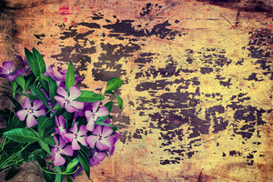 Grunge background with periwinkle