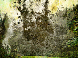 Grunge Concrete Lichen Wall Background