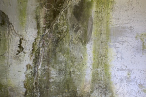 Grunge Concrete Wall 2