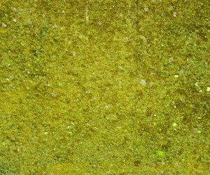 Grunge Green Concrete Background