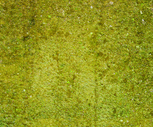 Grunge Green Moss Wall Background