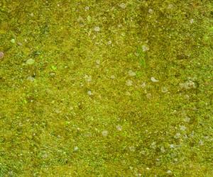 Grunge Green Wall Texture