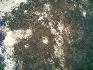 Grunge Texture 72