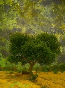 Grunge Tree Background