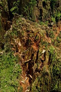 Grunge Tree Bark