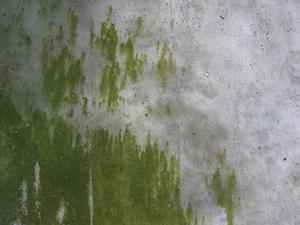Grunge Urban 44 Texture
