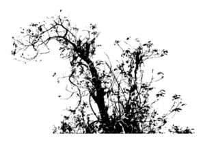 Grunge Urban Tree