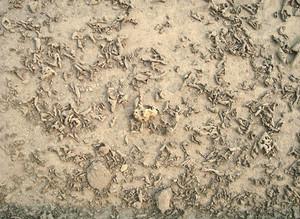 Grunge_soil_land