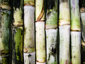 Grunge_sugarcane_texture_background