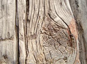 Grunge_tree_knot