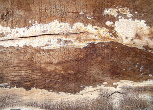 Grunge_wooden_texture