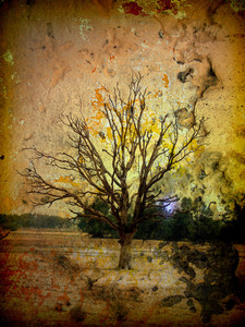 Halloween Creepy Alone Dead Tree Background