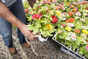 Handling plants at a nursery