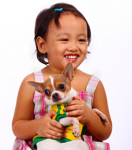 Happy Girl Holding And Cuddling Her Pet Chihuahua