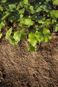healthy tree growing in soil pattern