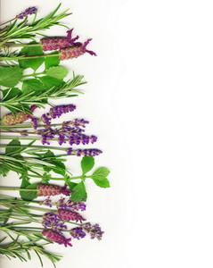 Herb Border On White