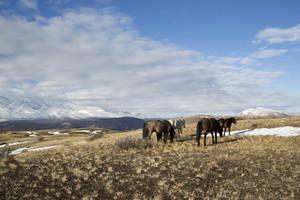 Herd of horses grazing in a frosty, mountainside field