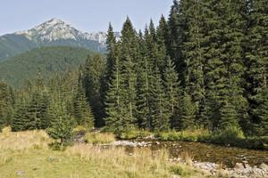 High Polish Tatra Mountains Background