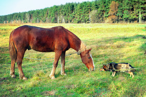 Horse and dog sniff to each other