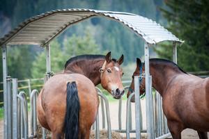 Horse closeup