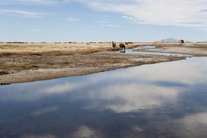 Horses grazing along a calm river