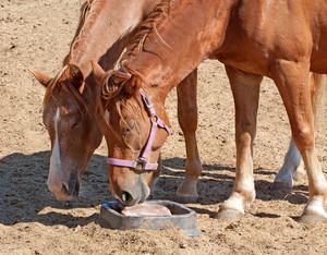 Horses Sharing Vitamins