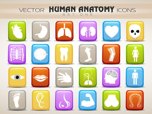 Human Anatomy Website Icons Set.