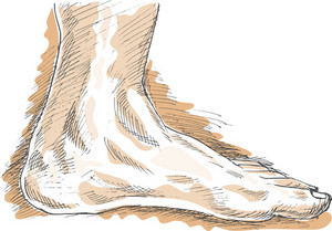 Human Left Foot Viewed From Side