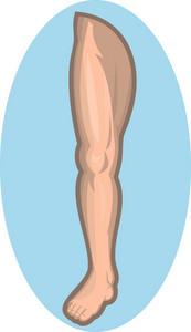 Human Leg Facing Front