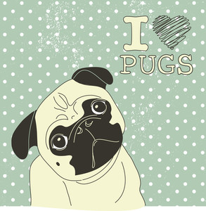 I Love Pugs! Cute Little Pug On Polka Dot Background
