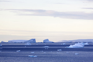 Icebergs during a rosy dawn