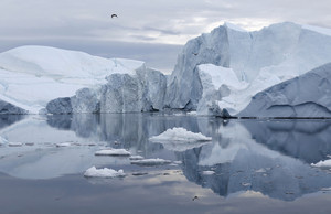Icebergs reflected under a grey sky with birds overhead