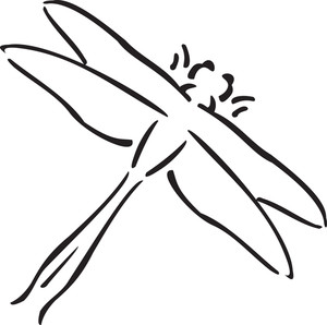Illustration Of A Dragonfly.