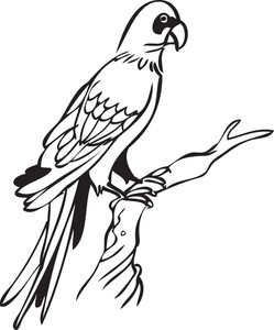 Illustration Of A Parrot.