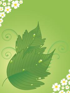Illustration Of Fresh Leaves