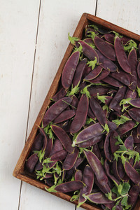 Fresh Purple Mangetout