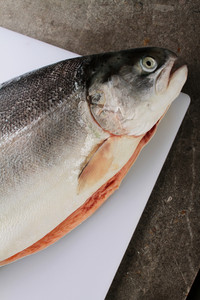 Fresh Sea Trout