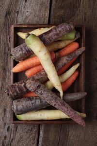 Fresh Harvested Carrots