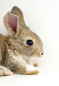 Isolated Bunny