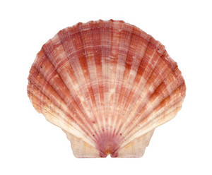 Isolated Shell