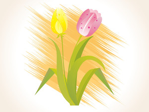 Isolated Tulip Blossoms With Background