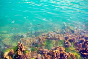 Jellyfish in black sea water