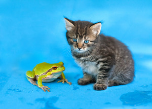 Kitten and the Frog